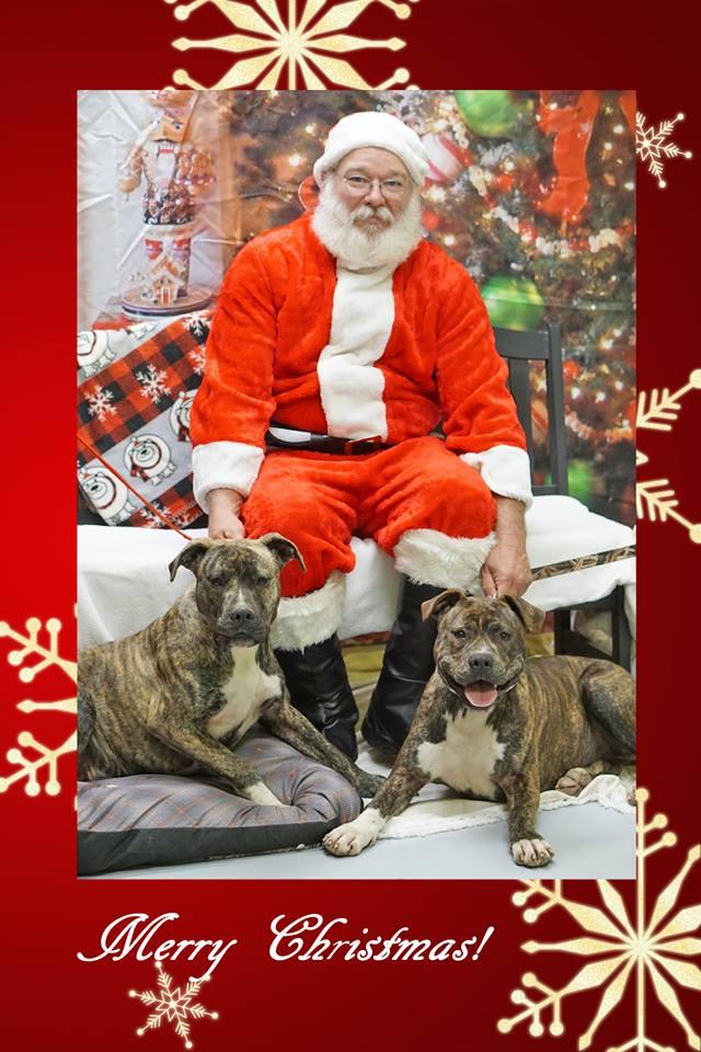 Santa & dogs.jpg