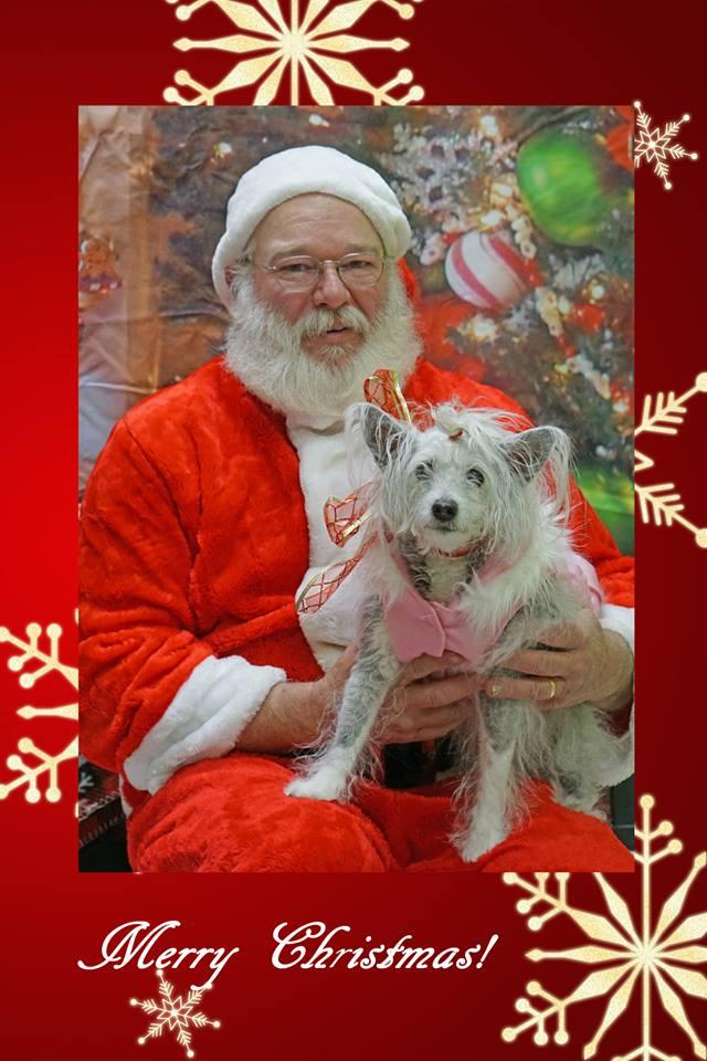 Santa & dog.jpg