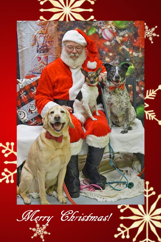 Santa and 3 dogs.jpg