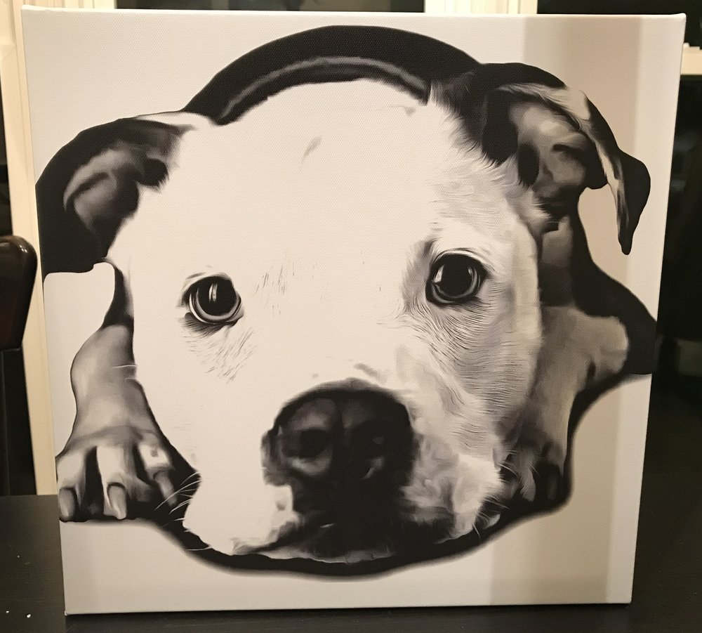 Dog print package 1.jpg