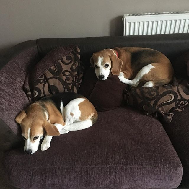 Our weekend hosts' early morning pups. And she knows she's not allowed on top of the cushions like that.