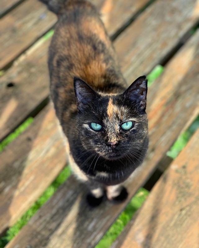 Titi has always had resting bitch face. Still cute though! #catsofinstagram