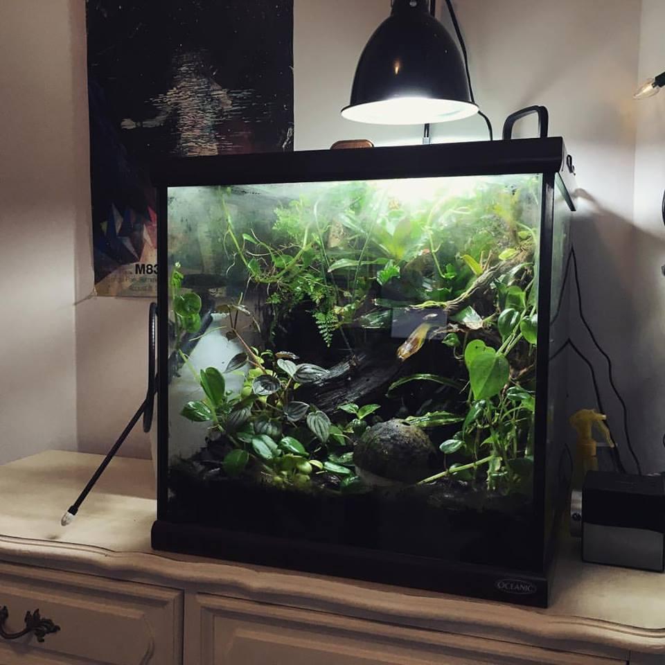 frog-tank.jpg