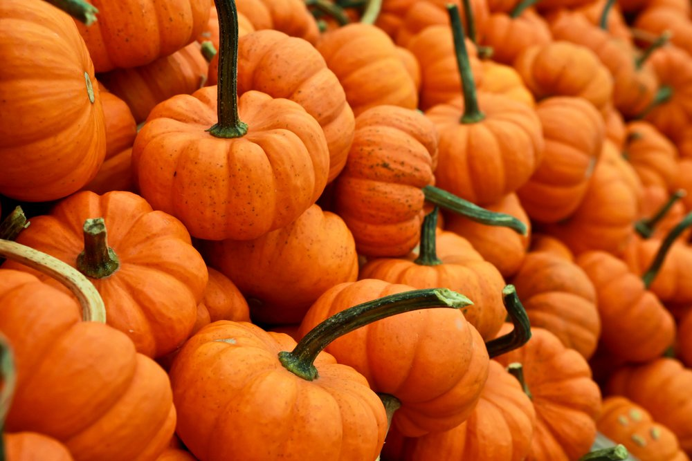 Food Allergies, Safe Halloween, Teal Pumpkin Project