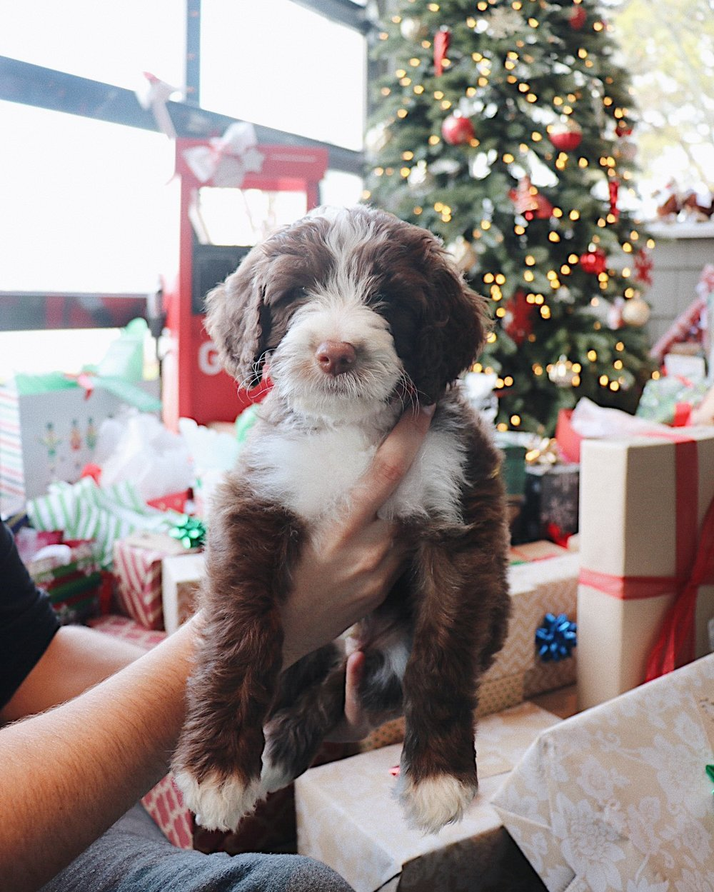Ryder's first Christmas - 2018.