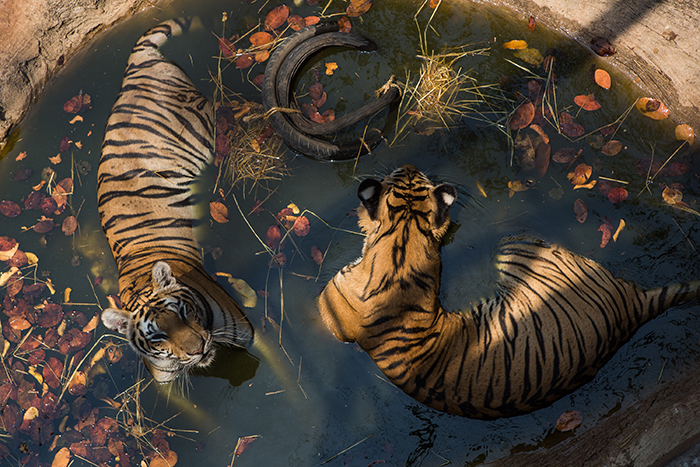 AMANDA MUSTARD Bangkok, Thailand  www.amandamustard.com   @amandamustard  //  @mustardphoto
