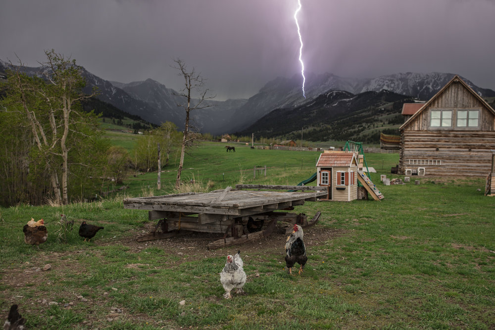 LOUISE JOHNS  www.louisejohnsphoto.com  |  @e.l.johns   Chickens in the barnyard of the Anderson Ranch flee from a thunderstorm in the Tom Miner Basin, Montana on May 22, 2018. Tom Miner Basin is a small ranching community located on the northeast border of Yellowstone National Park.