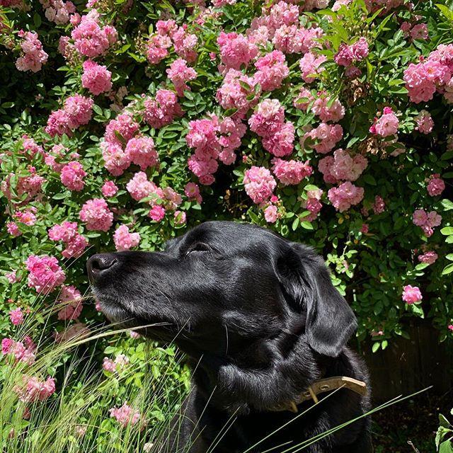 #springtime for Riley
