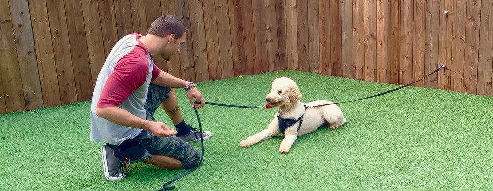 brandon-mcmillan-training-dog