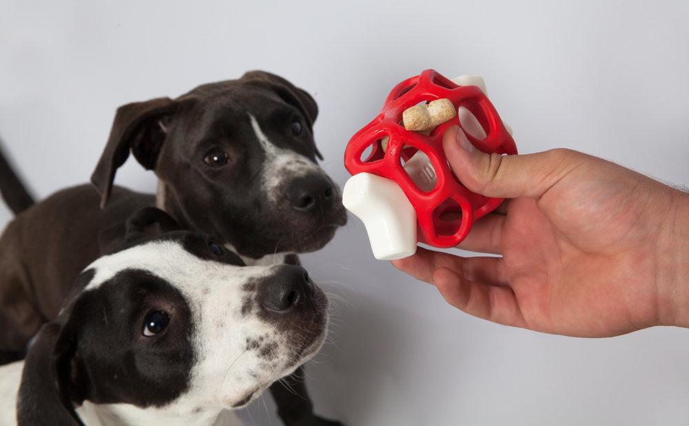 dogzilla-dog-toys-dogs-nicholas-baker