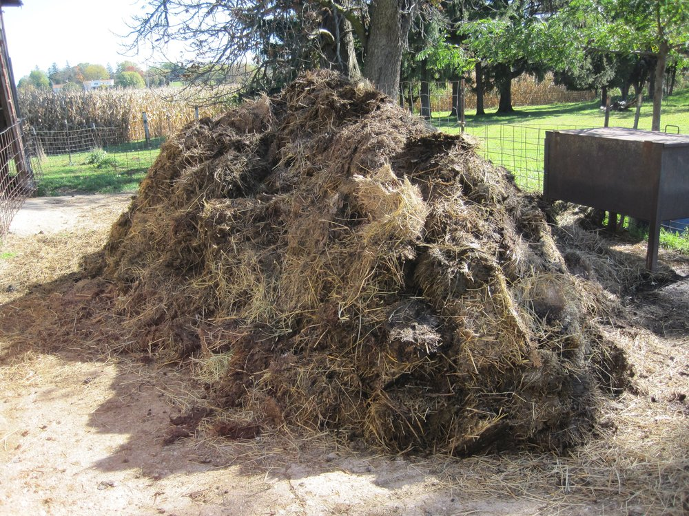 One forkful at a time, we pitched this pile of manure out of the sheep shed.