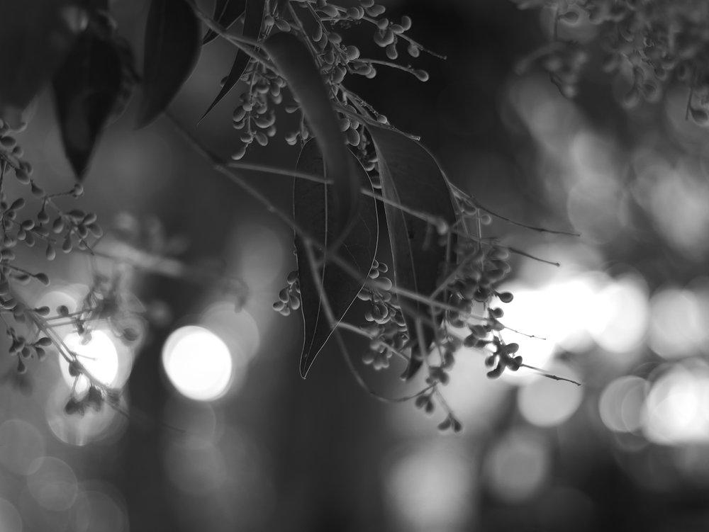 backlit_1500.jpg