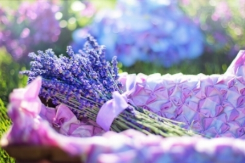 lavender gives a pop of color and serves as a bug repellent!