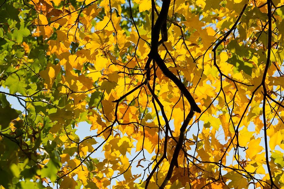 autumn-1735428_960_720.jpg