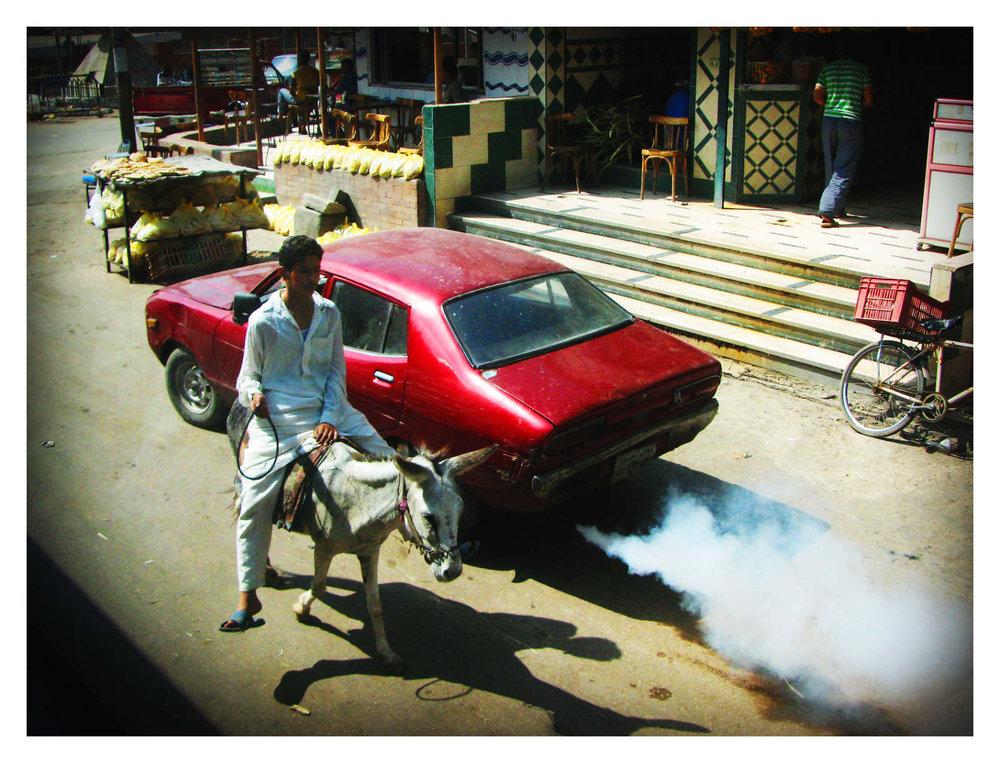 Smog-Donkey_1600_c.jpg