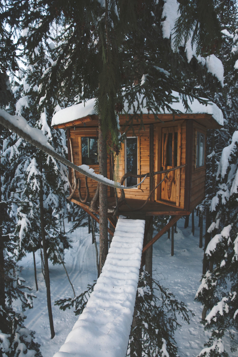 Forest Treehouse
