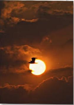 soaring sun.jpg