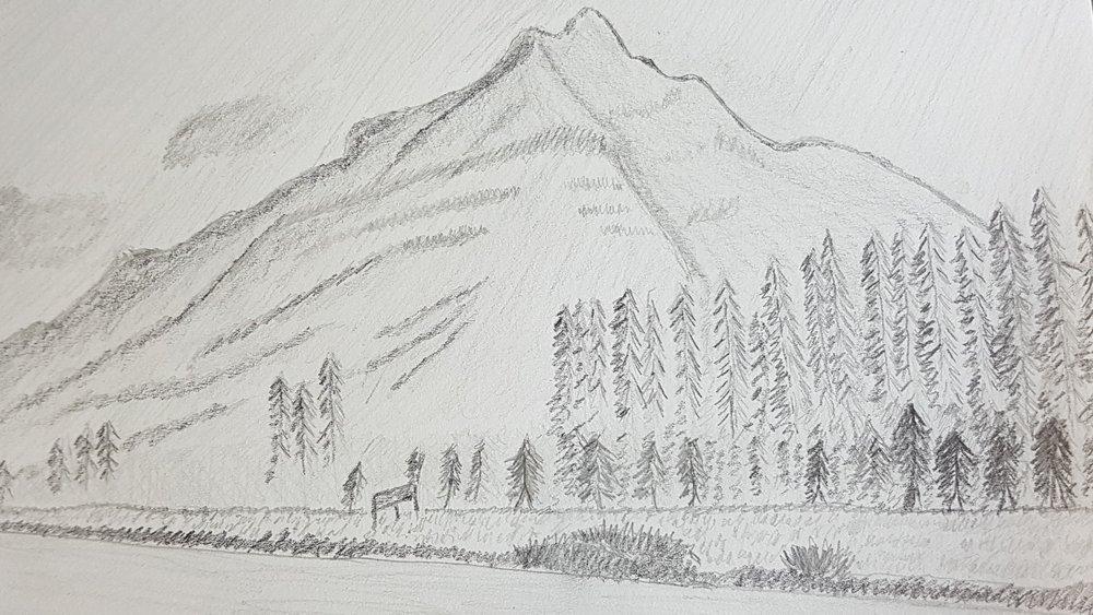 Graphite drawing - Moose Meadows, Banff, AB - Kandice Leaf