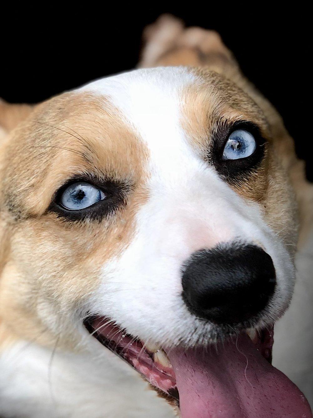 BabyBlue eyes.jpg