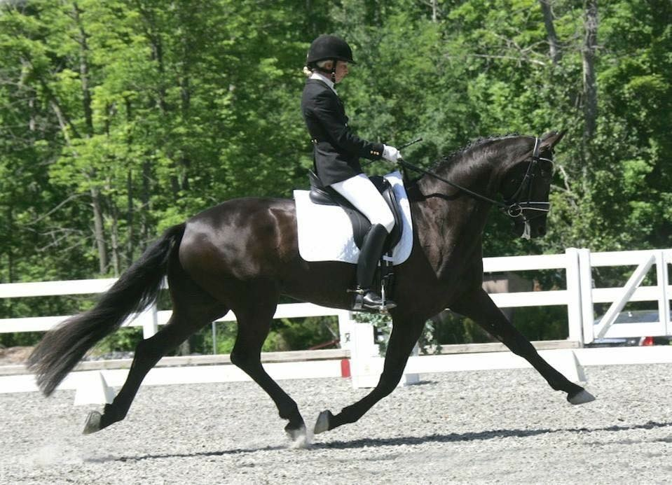 Watch Me (Welfenkonig II/Donnerhall/Westwall) Bred, Owned, and Ridden by Eliza Rutherford