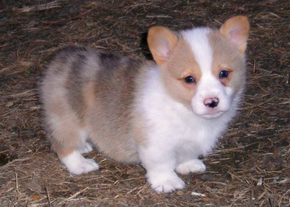 Fennec as a pup