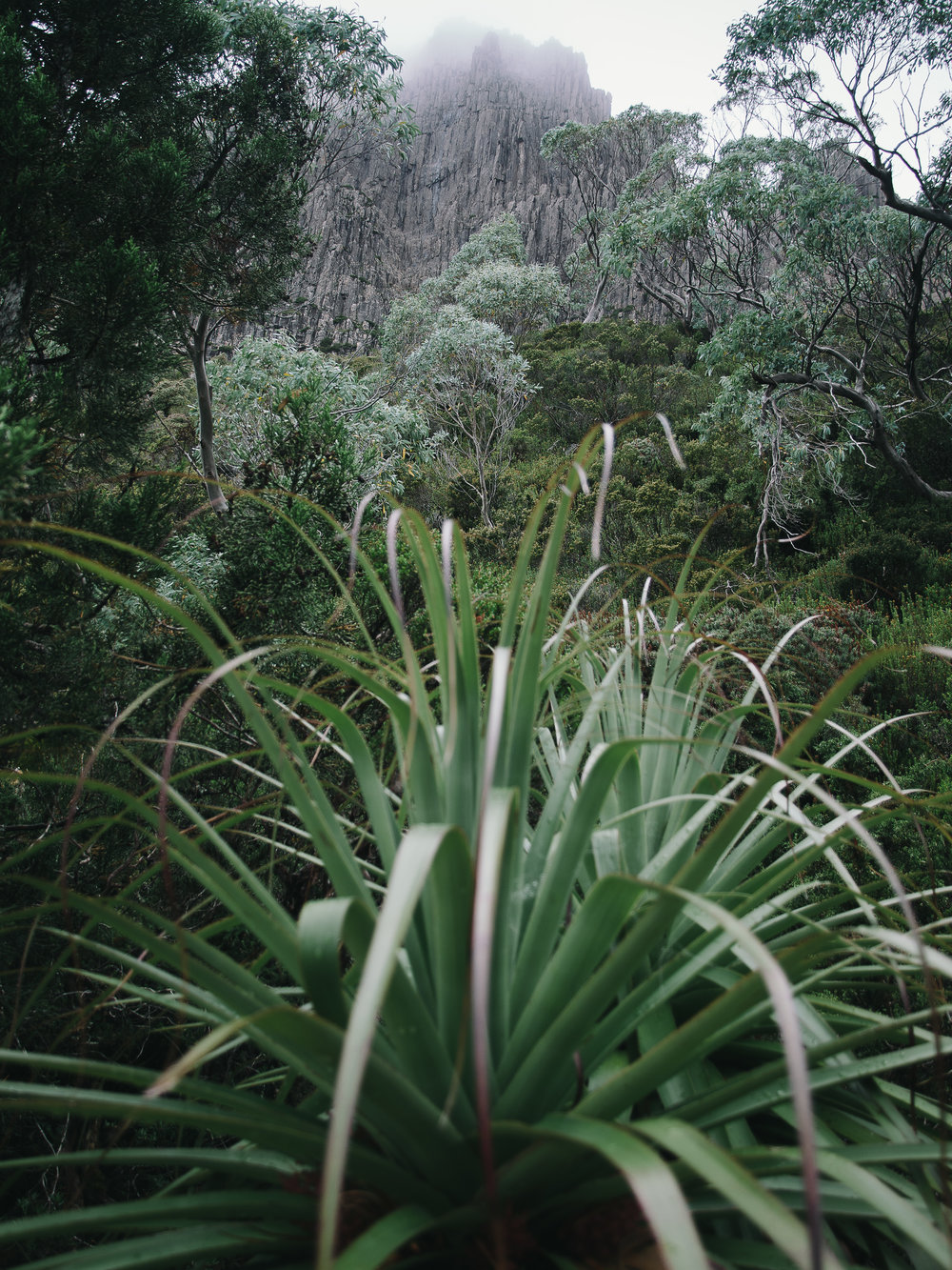 Pandani Cradle Mountain-1.jpg