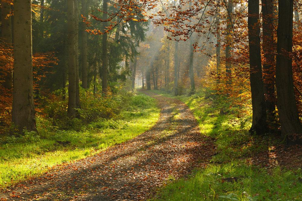 Nature_ReduceStrss_Blog.jpg