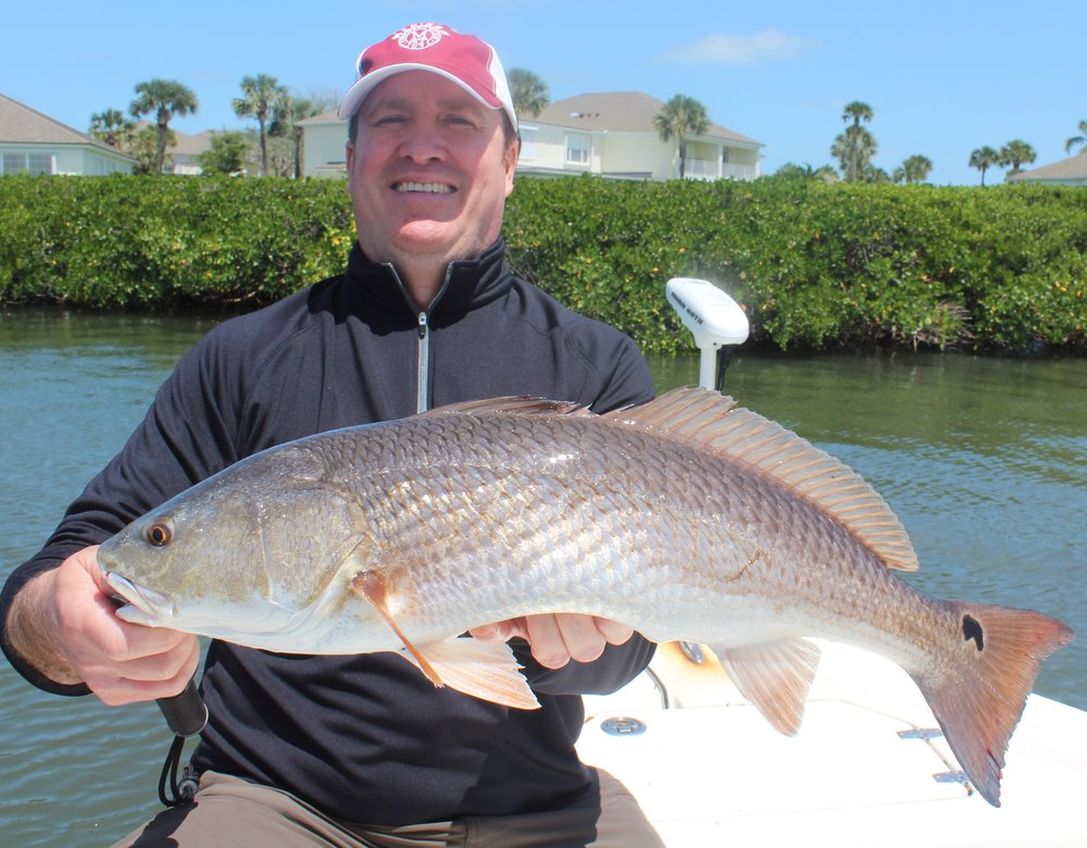 Healthy Indian River Lagoon Redfish