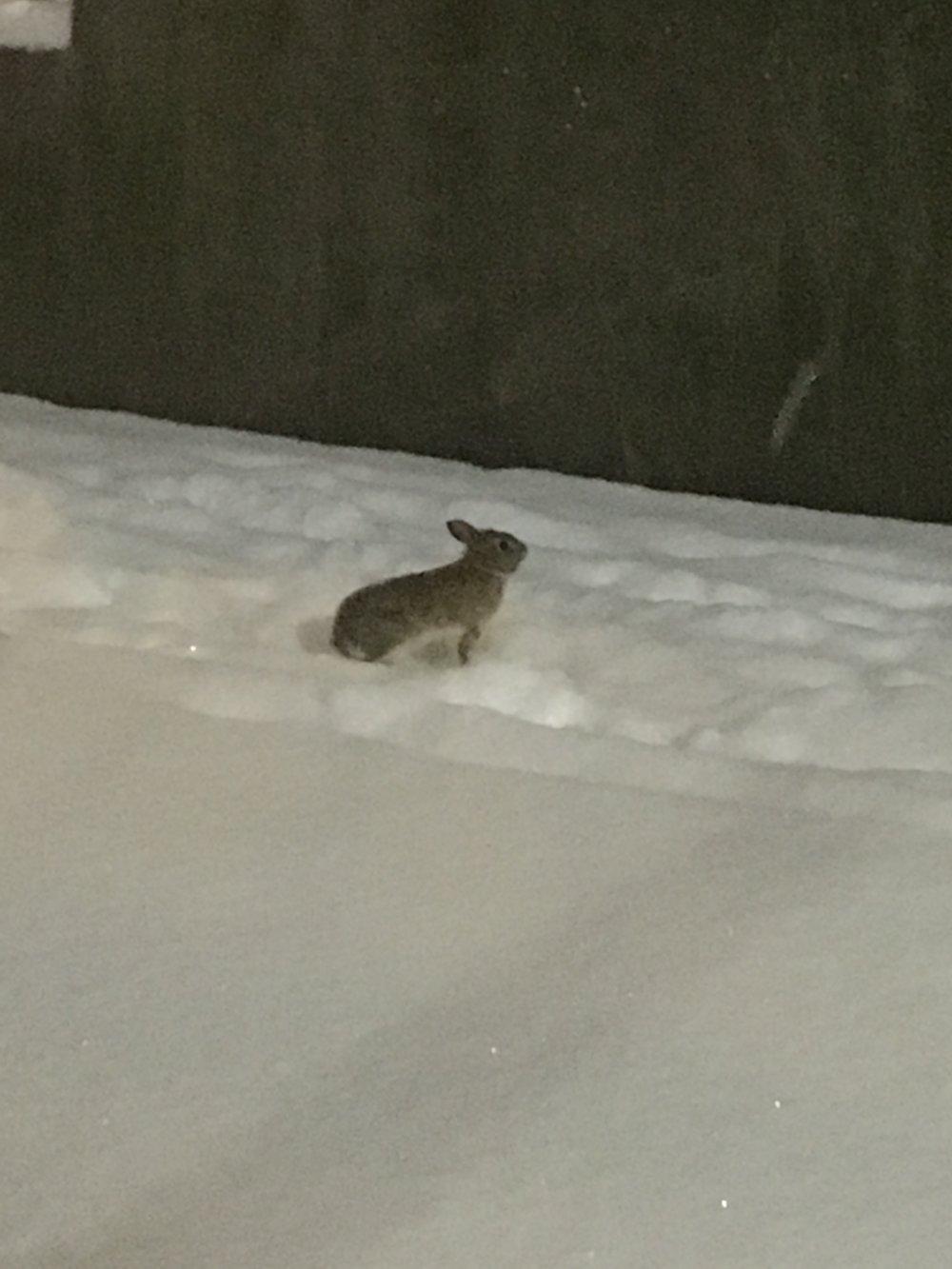 a tiny little bunny!