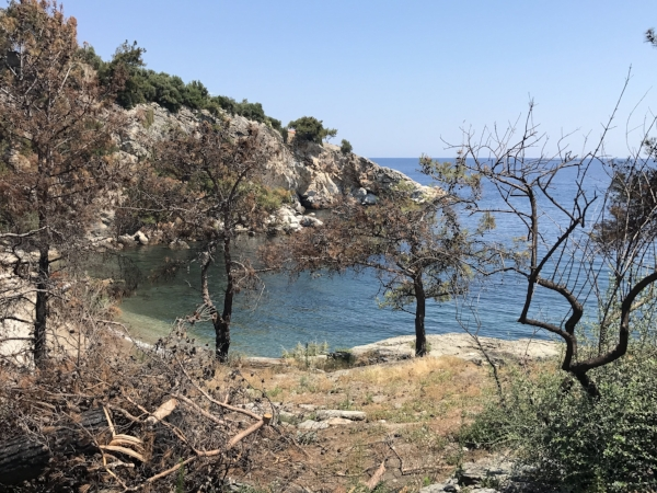 in memory of Thassos, Sept 10th, 2016