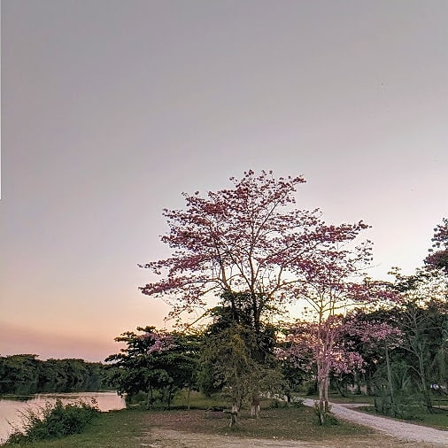 Ahhh April... You bring such gorgeousness 📸 @davystein3 - - - - - #explorebelize #riohondo #getlost #explorer #worldshotz #discoverearth #travelphoto #travelworld #keepexploring #roamtheplanet #exploretheglobe #Belize #mybelize #explorebelize #stayandwander #keepitwild #earthofficial #nationalgeographic #travelstoke #wanderlust #three #negativespace #takingroute