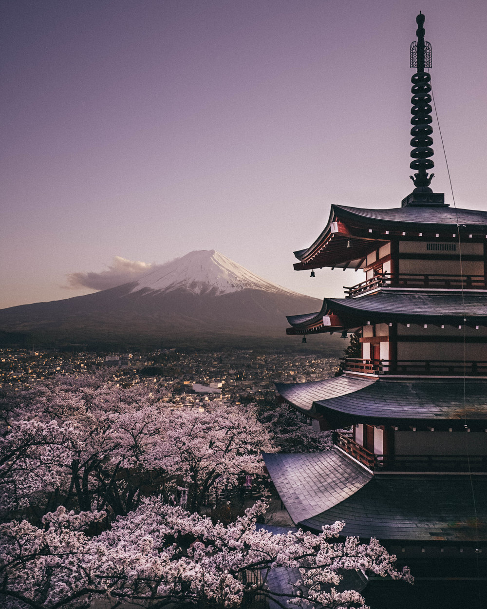 cherry blossom-3.jpg