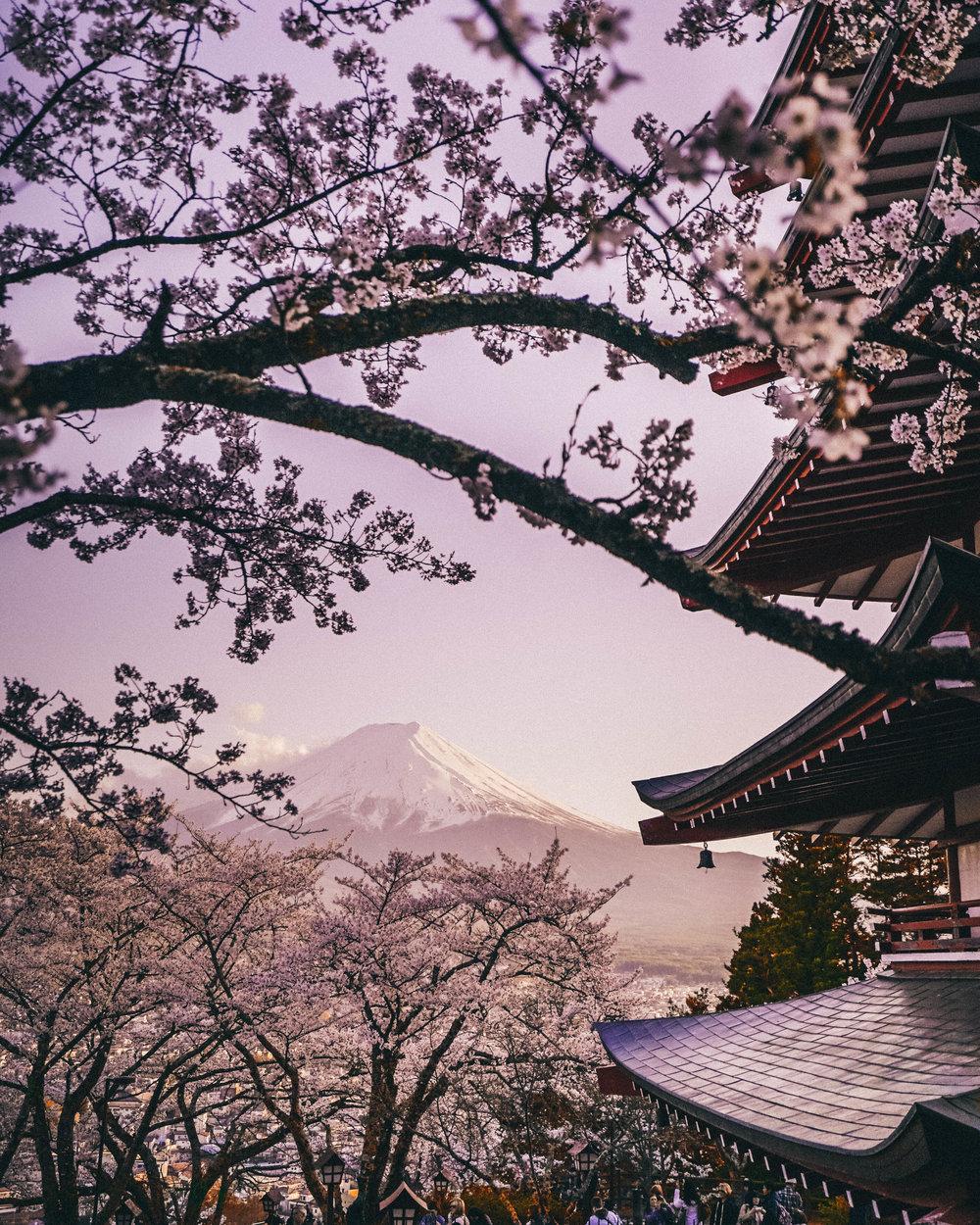 cherry blossom-4.jpg