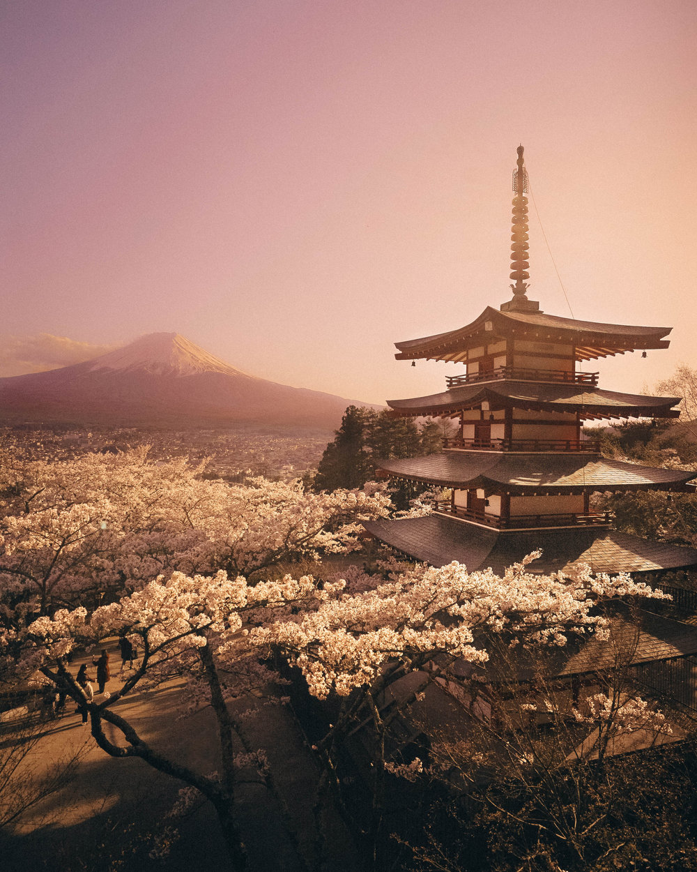 cherry blossom-5.jpg