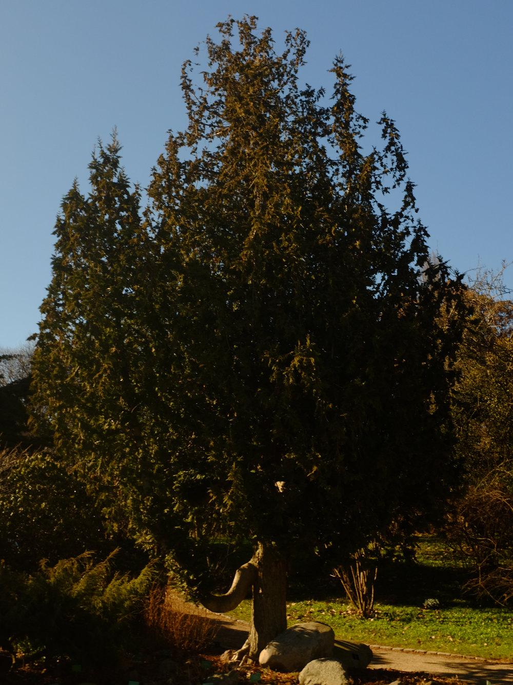 03-12-17_08.jpg