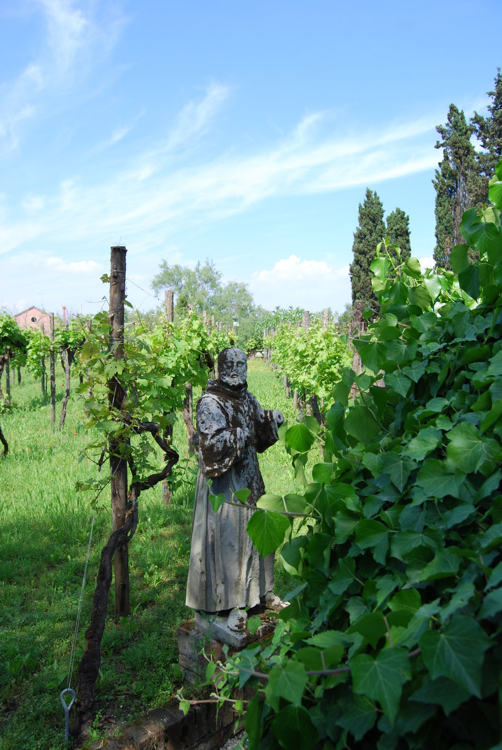 Monk in a Vineyard , taken by the author, May 8, 2013, Torcello Island, Venice, Italy.