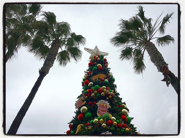 Must be a California Christmas. Palm trees and pine. Happy Holidays everyone. #christmas #decorations #sealbeach #familytime #homefortheholidays