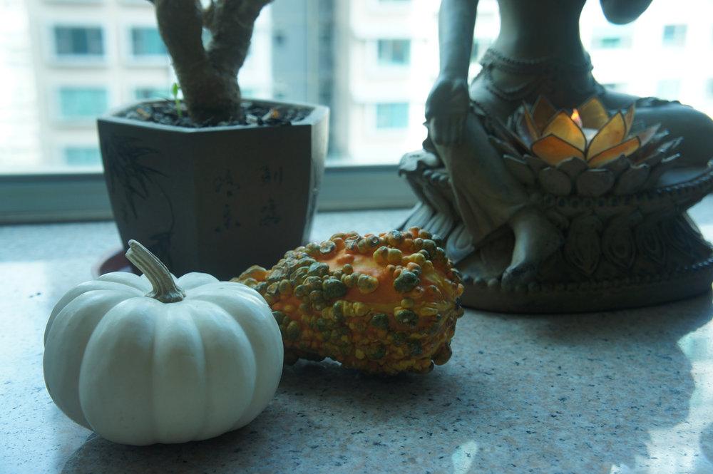 halloween gourds.JPG