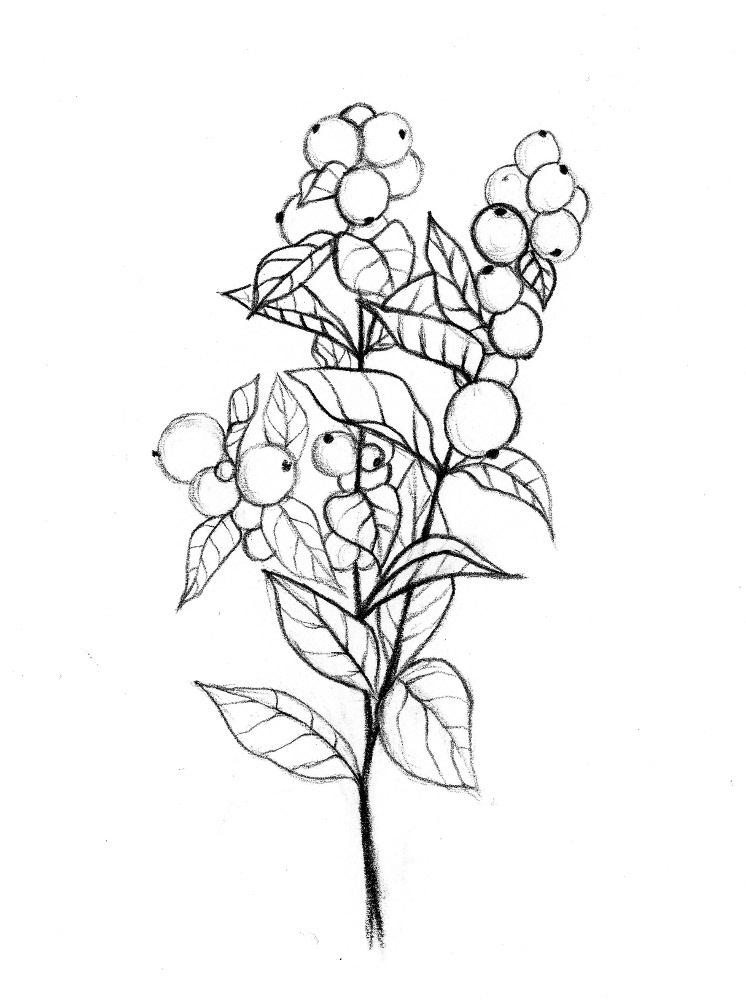 snowberryfin.jpg