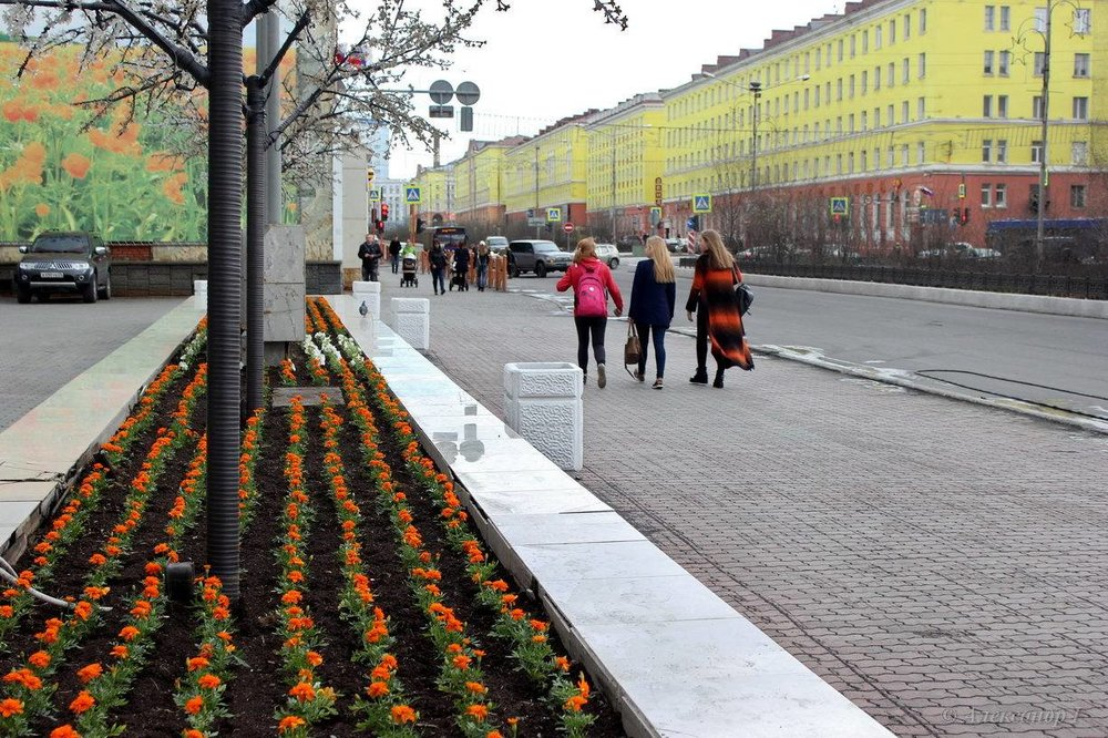 Norilsk Russia: Flowers blooming everywhere