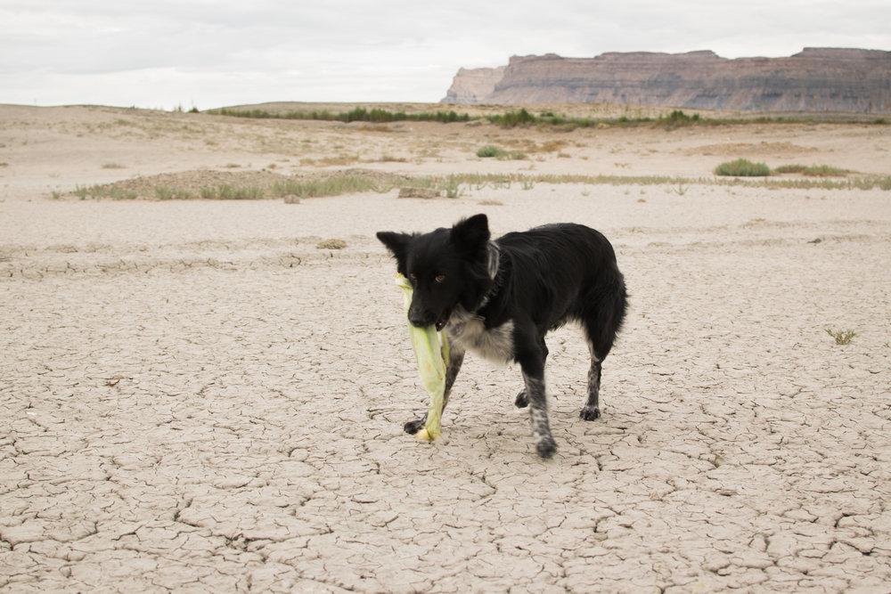 Ese the dog, eating corn in the desert
