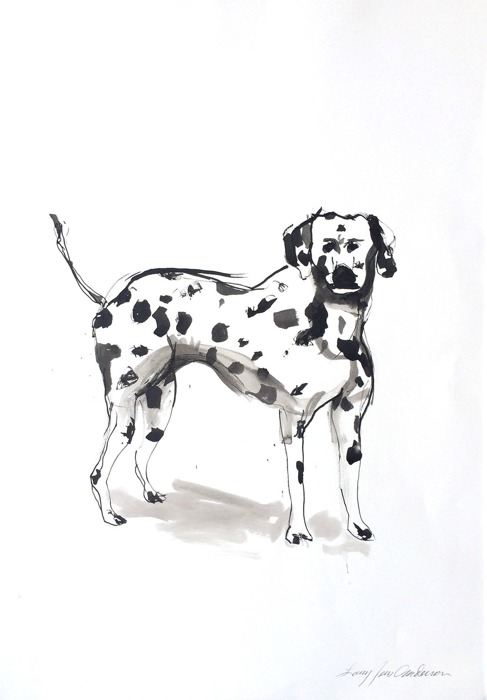 Spotted Dog Ink on paper 29 x 21 inches LJA 106G