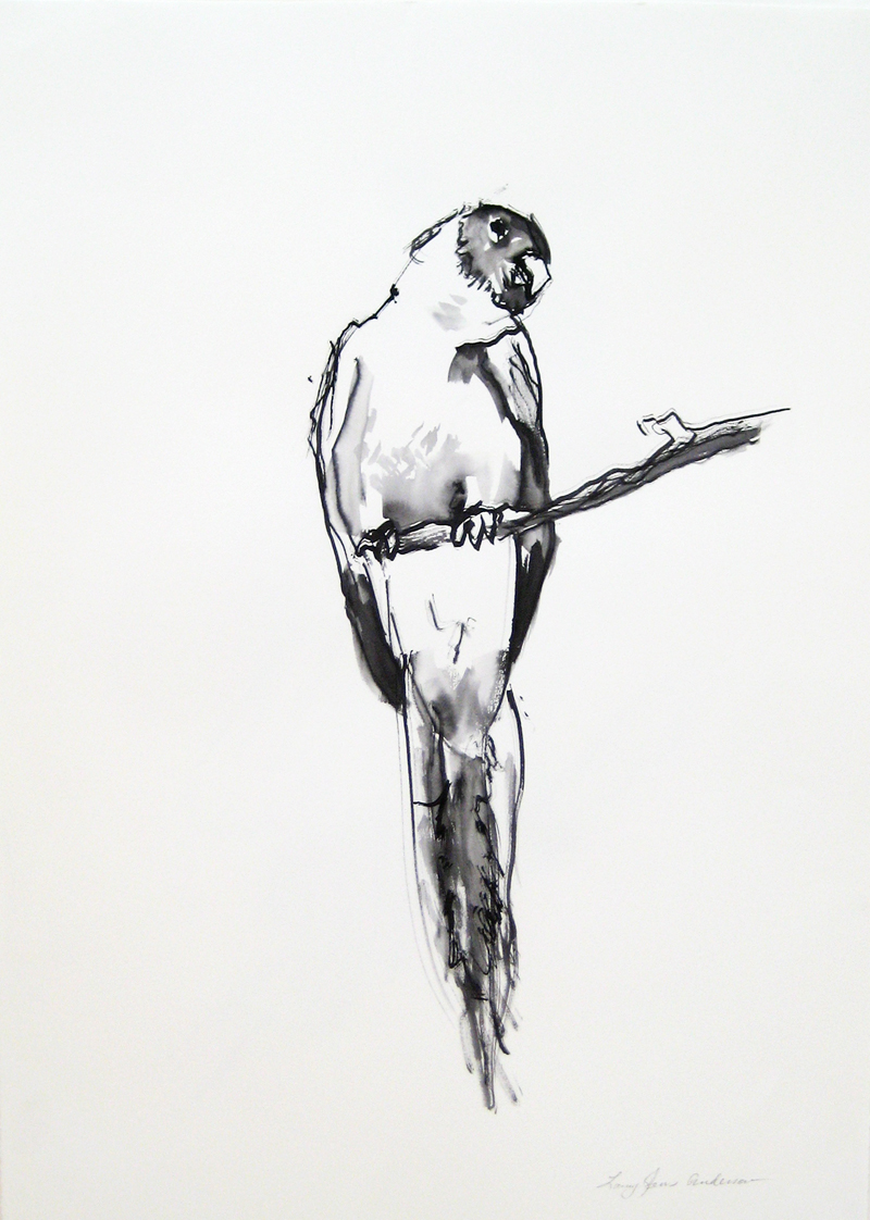 Parrott ink on paper 22×30 inches