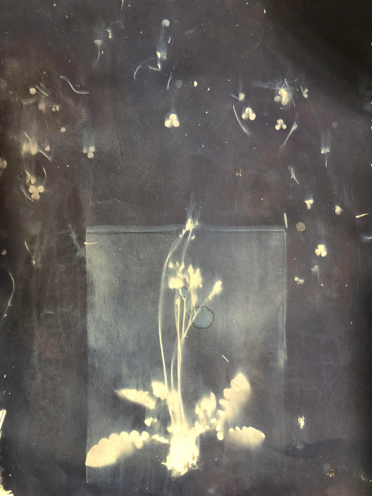 Hannah Burton  22x30,  Picture Me At Home , Cyanotype