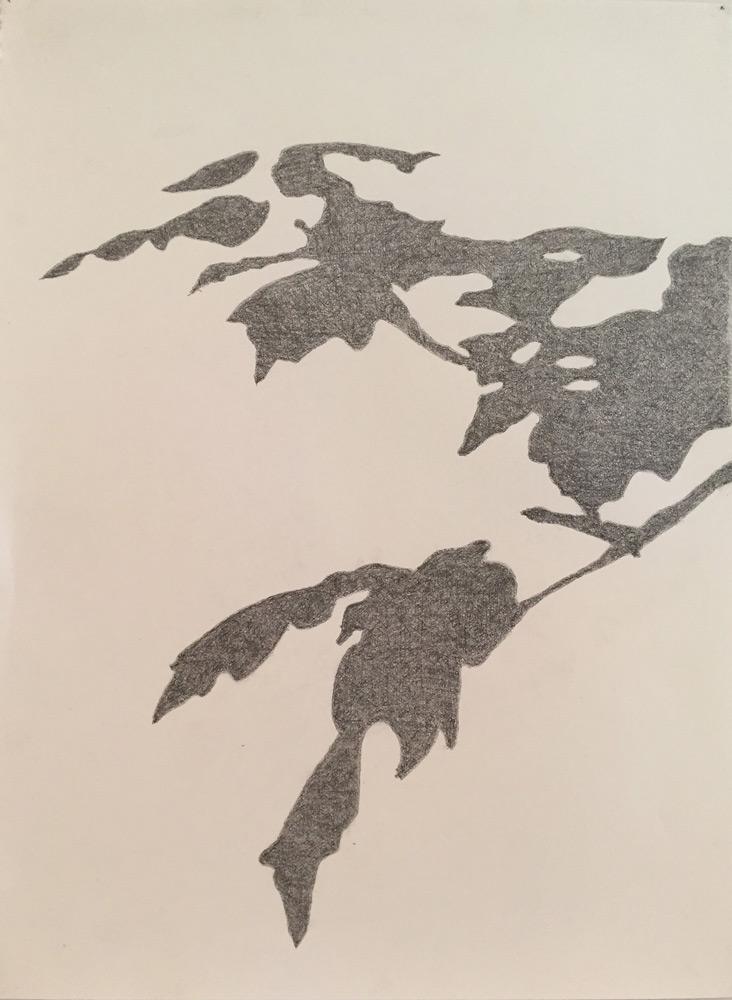 """Lynn Montagne   Tripetala 1 , graphite on paper, 22""""x30"""""""