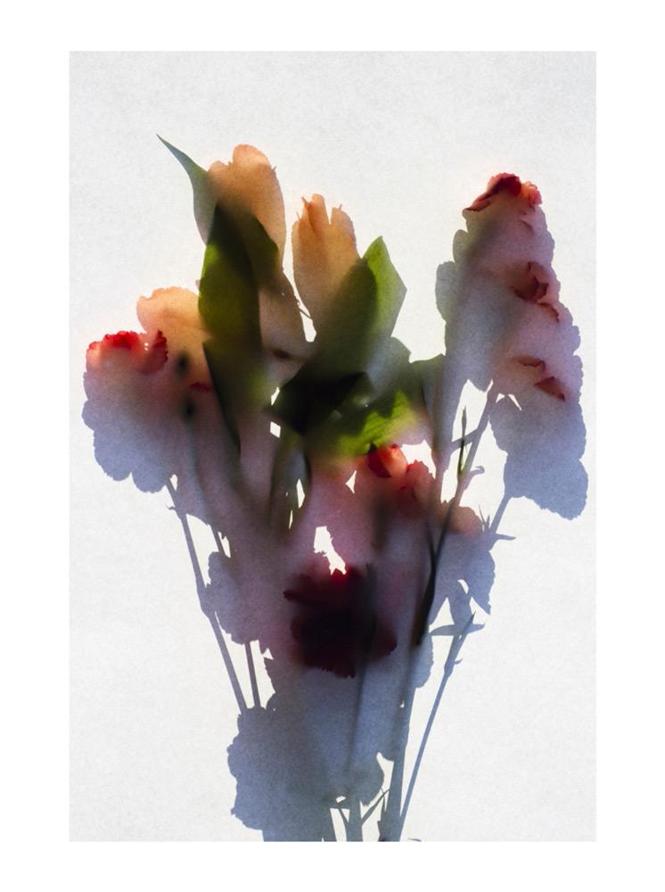 Richard Solomon   Tiger Lilies  archival pigment print 30x20