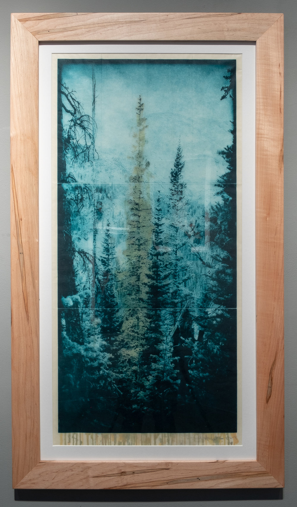 "Todd Anderson ""Mountain Pine Beetle"" Photopolymer gravure on Japanese Washi paper, waxed and overlaid onto European rag paper, watercolor 16 x 32 inches TAN 032G"