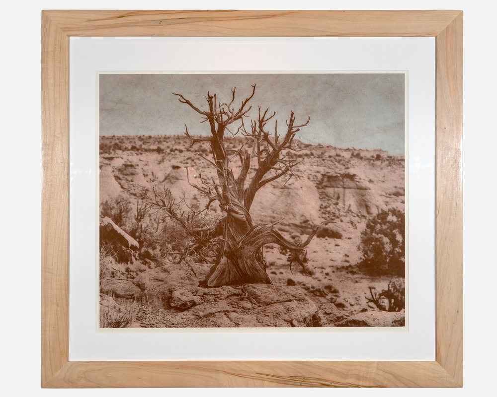 Juniper Tree — Grand Staircase Escalante National Monument   Photopolymer gravure on Japanese Washi paper, colléd onto European rag paper  32 x 30 inches TAN 036G
