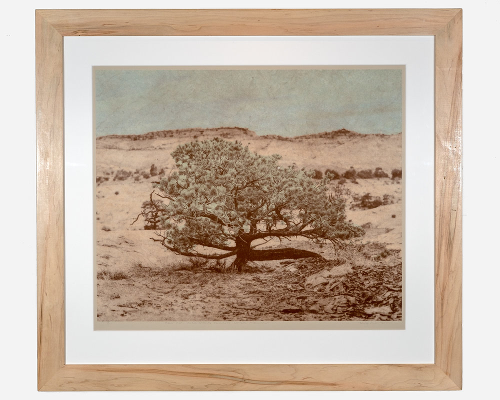 Piñon Pine — Grand Staircase Escalante National Monument   Photopolymer gravure on Japanese Washi paper, colléd onto European rag paper   32 x 30 inches TAN 035G