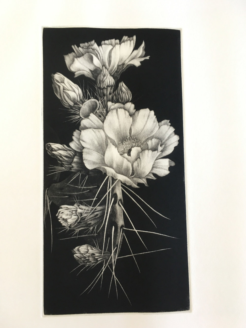 Jennifer Clarke   Desert Rose  Mezzotint 12 x 6 inches, APS 209G